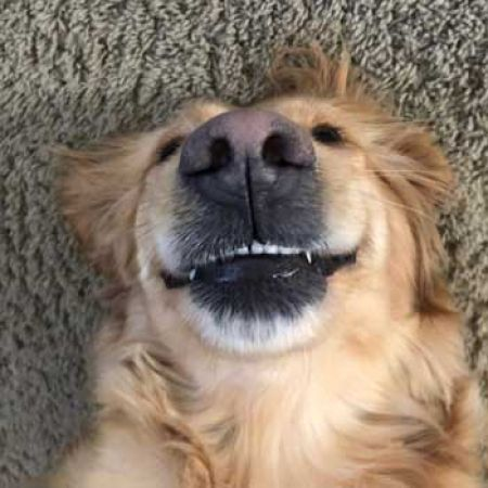 Check out Phoebe's Golden smile!