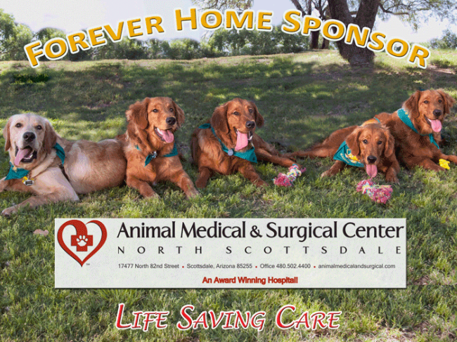 Animal Medical Surgical Center