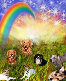 Rainbow Bridge dogs resized