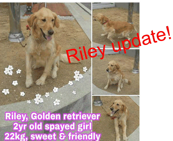 Riley update
