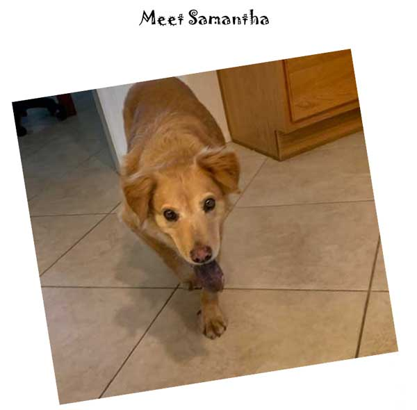 meet samantha