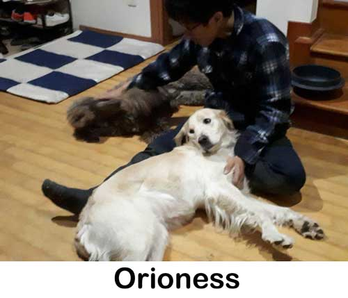 orioness