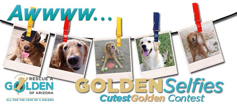 Cutest golden contest banner