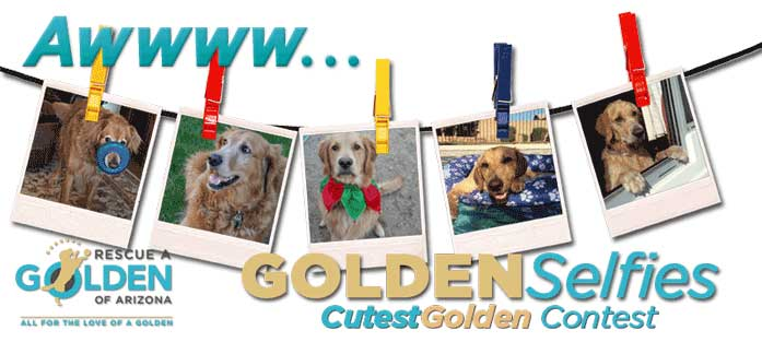 Cutest Golden 2017 2021 Masthead Banner 697