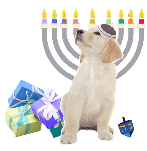 Golden Puppy Looking up left no shadow menorah dreidel gifts