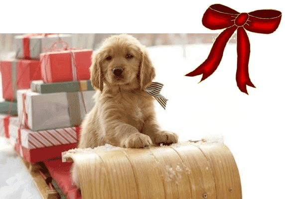 Puppy Sleigh Gifts bow