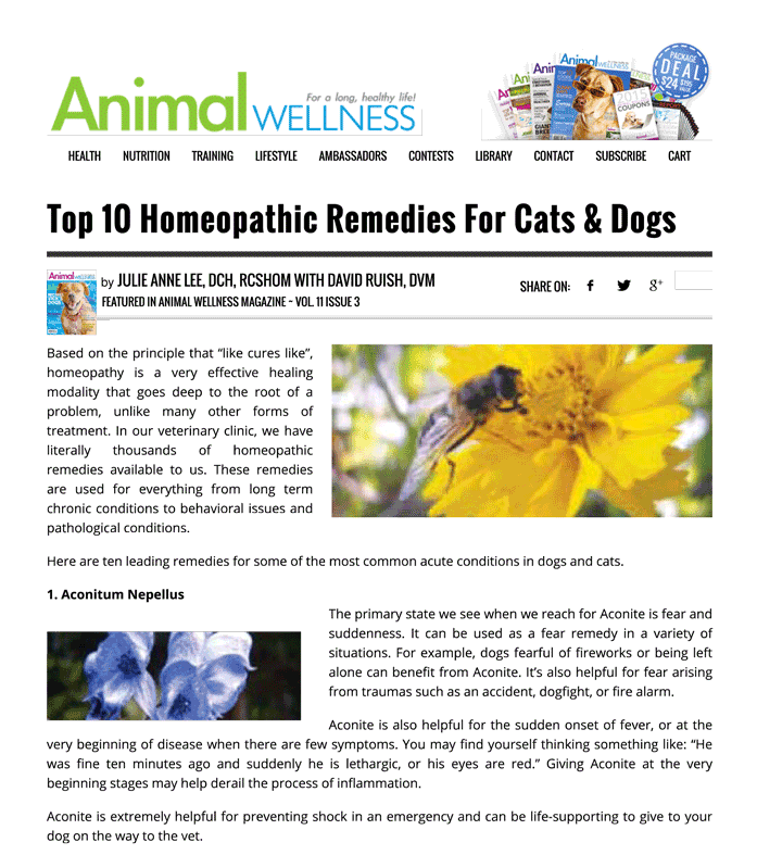 Top 10 Homeopathic Remedies For Cats Dogs Animal Wellness Magazine 1