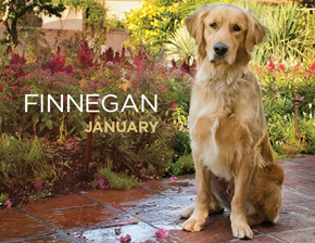 January Finnegan290