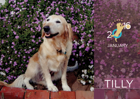 01TILLY January290