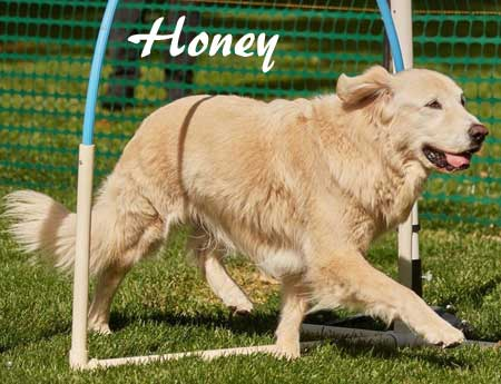 14_Oldest-Honey-450.jpg