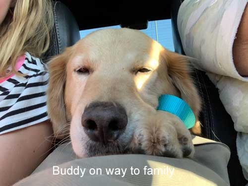 Buddy-19-036-on-way-to-family.jpg