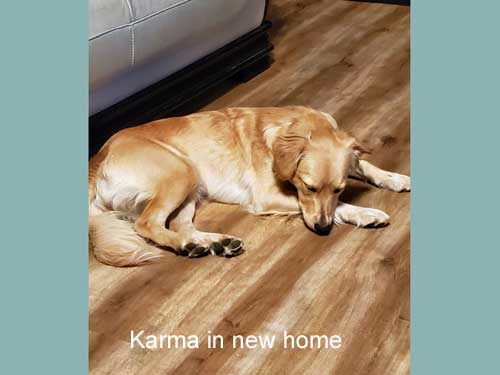 Karma-19-035-in-new-home.jpg
