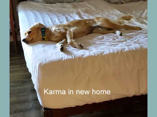 Karma-19-035-in-new-home2.jpg
