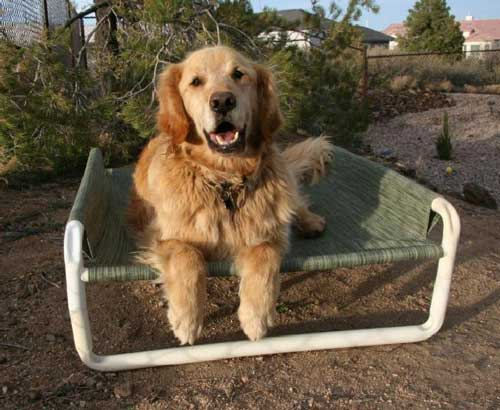 siris-outdoor-raised-dog-bed